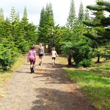 hawaii-christmas-tree-farm