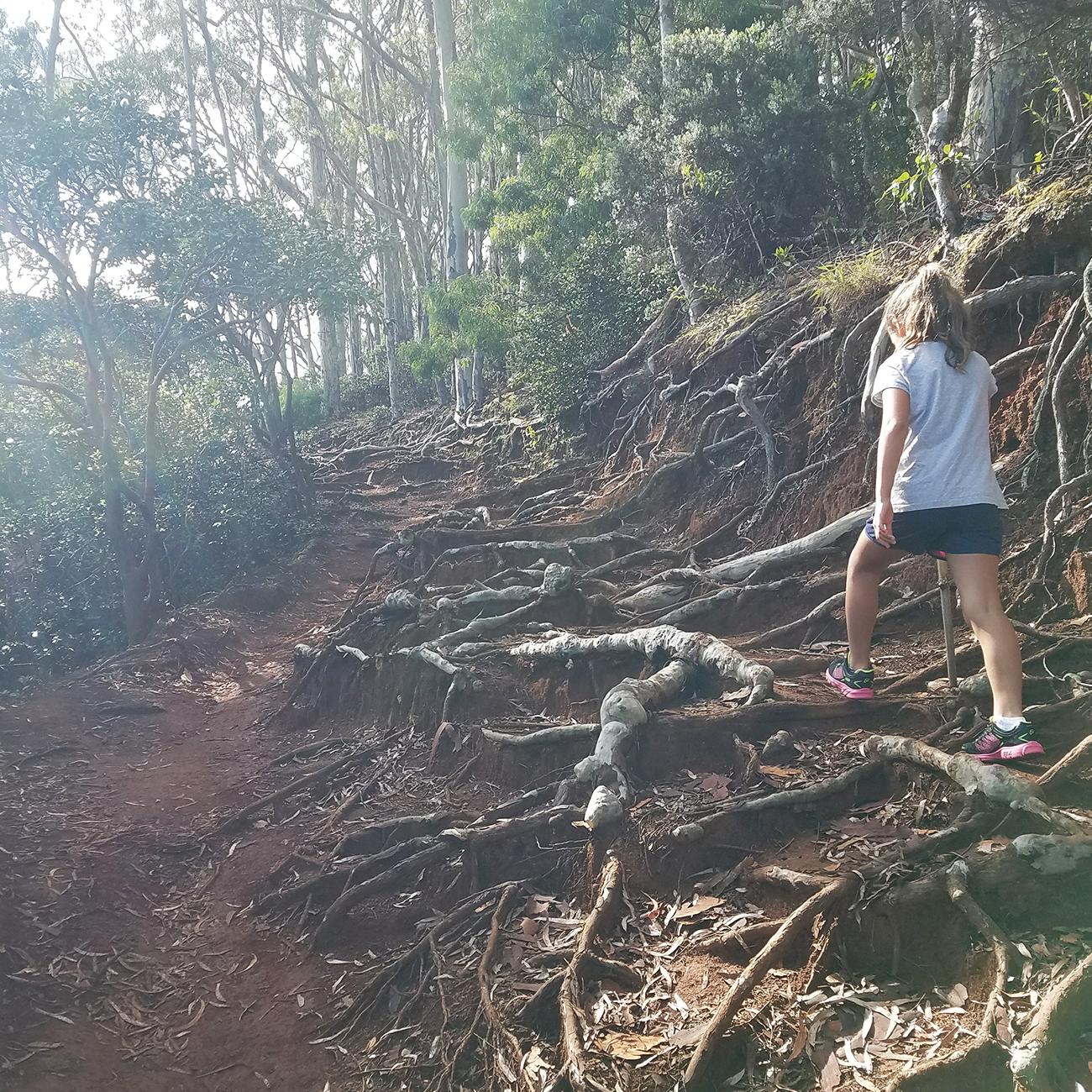 Aiea Loop Trail Roots