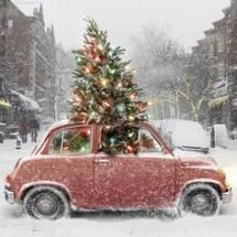 VW Bug and Christmas Tree