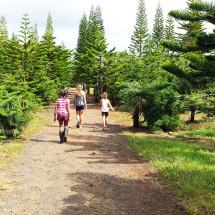 hawaii-christmas-tree-farm
