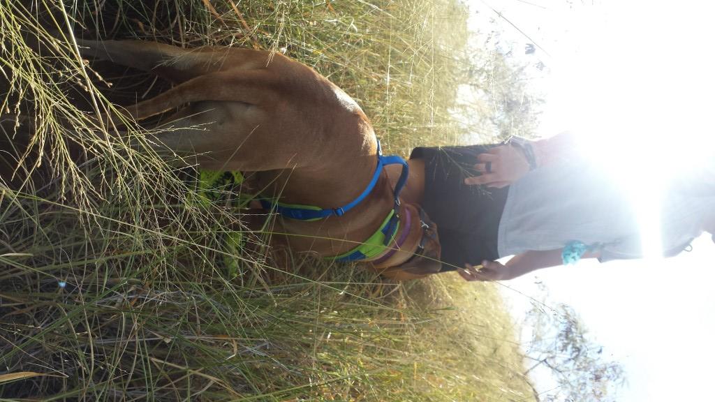 Hanauma Bay Ridge Hike Tall Grass