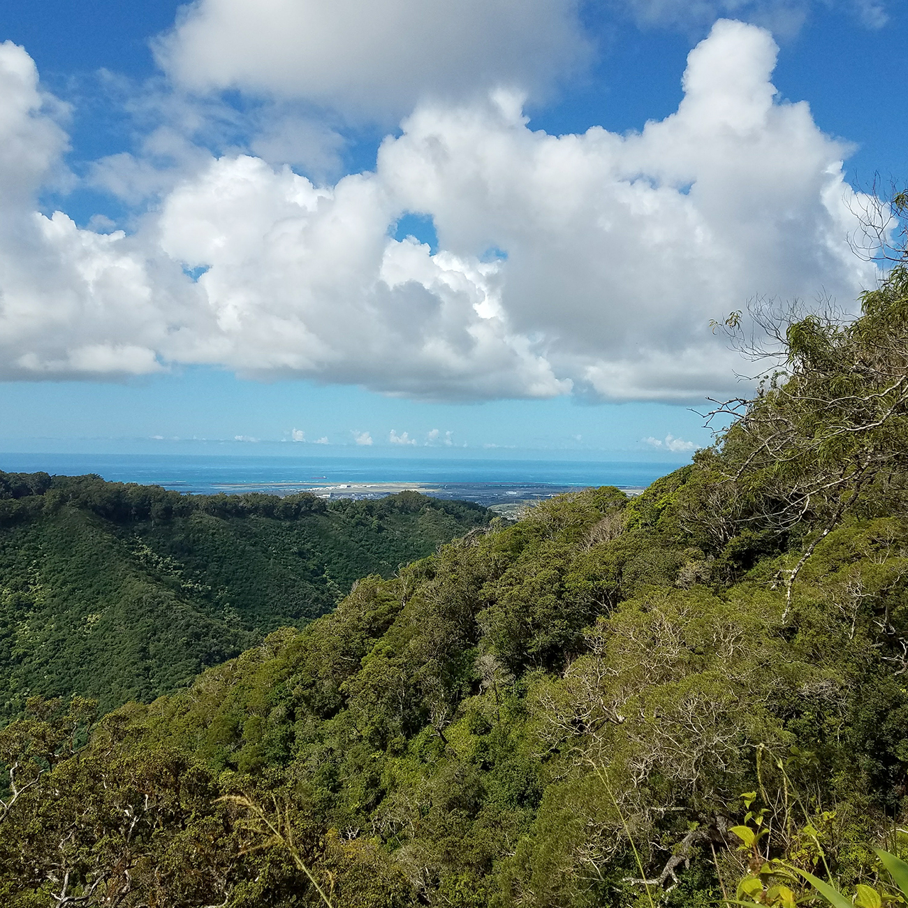 Aiea Loop Trail Ocean View