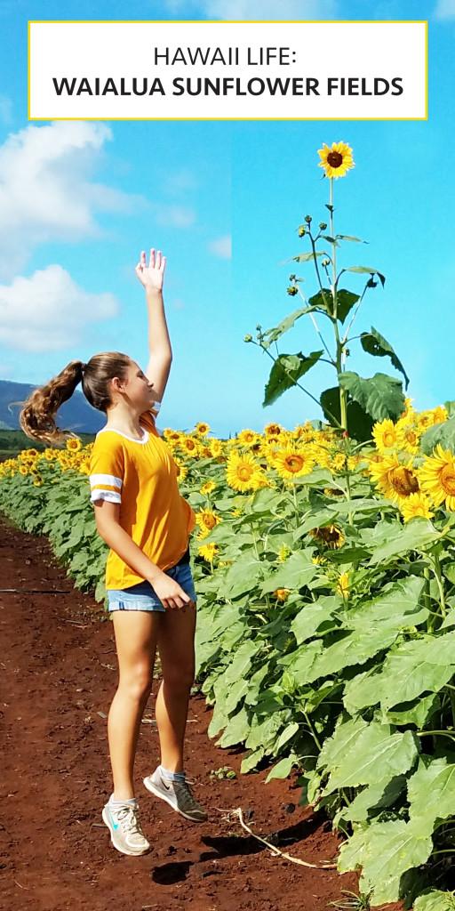 Hawaii Life: Waialua Sunflower Fields