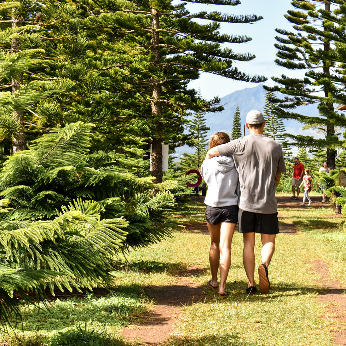 The Tradition Of Christmas Trees: Christmas Trees In Hawaii: Helemano Farms